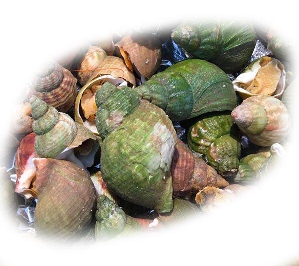 suggestion assiette apéro coquillages et crevettes